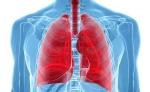 Pulmones-sanos